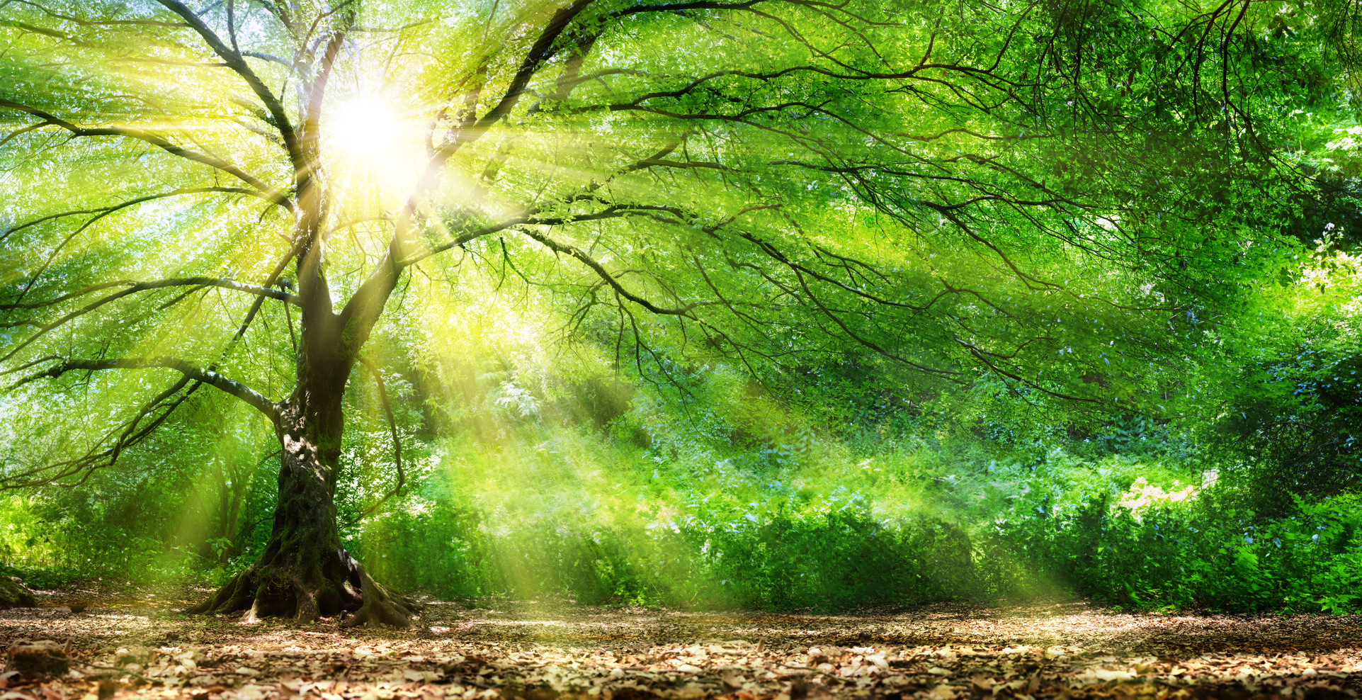 Green & Organic